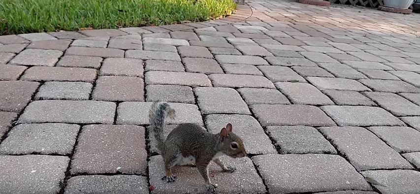 How Do I Clean Squirrel Feces out of My Attic?